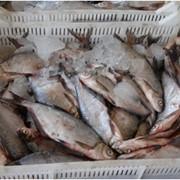 Рыба речная свежемороженная фото