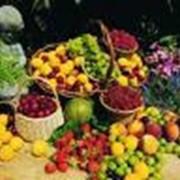 Биоорганические удобрения торговой марки Фито+. фото