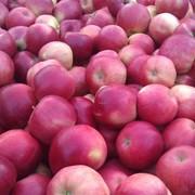 Яблоки мелкоплодные фото