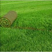 Реставрация газонов фото