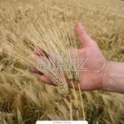 Торговля зерном фото