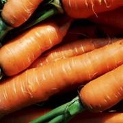 Морковь, Беларусь фото