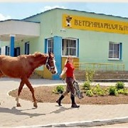 Услуги ветеринарные терапия фото