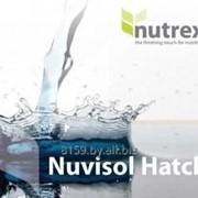Комплекс витаминный для птицы Нувисол Хэтч фото