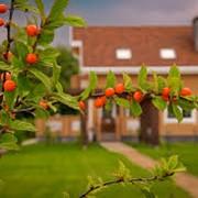 Посадка плодово-ягодных кустарников фото