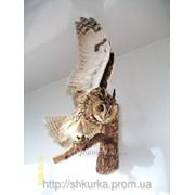 Чучело совы фото