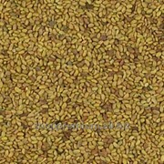Семена люцерны (для проращивания) 0,5кг фото