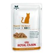 Лечебный консервированный корм для кошек до 7 лет Royal Canin Senior Consult Stage 1 Wet 0,01 кг фото