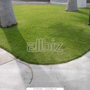 Устройство газонов, цветников и альпинариев фото