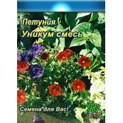 Цветы Петуния Уникум (смесь) http://seed-shop.com.ua/katalog/odnoletnie/petunia_unikum.jpg(0.2г) фото