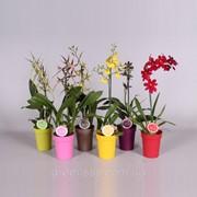 Орхидеи -- Orchids фото