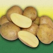 Картофель Тоскана фото