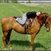 Лечебная верховая езда Житомир фото
