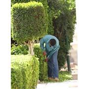 Квалифицированные садовники.+79787839651 фото