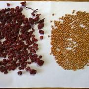 Семена лимонника в Приморском крае - цены, фото, отзывы, купить - BizOrg.su
