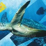 Подложка настольная Kite AP15-212K Animal Planet фото