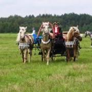 Прокат лошадей с экипажем фото