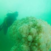 Дайвинг-тур в Мёртвом море фото