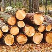 Экспорт, продажа леса круглого хвойного и мягколиственных пород, рудстойки, тех сырья хвойных и мягколиственных пород древесины для производства паллетных заготовок. фото