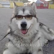 Дрессировка собак всех пород и возрастов фото
