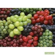 Виноград столовых сортов Мелитополь фото