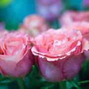 Срезанные цветы фото