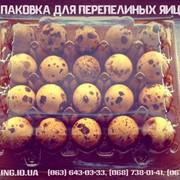Упаковка для перепелиных яиц, пластиковая упаковка под перепелиные яйца фото