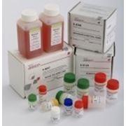 РеалБест, ДНК ВГВ (качественный вариант) фото