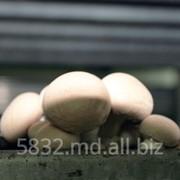 Экспорт грибов из Молдове фото