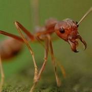 Истребление, выведение, средство, борьба, сэс, вытравить, уничтожение, избавиться от муравьев в Ростове-на-Дону. фото