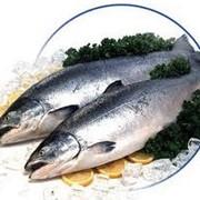 Продажа рыбы (консервы). Торговый Дом Палитра фото