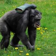 Фотосессии для животных фото