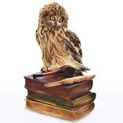 Композиция Чучело совы с книгой фото