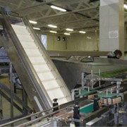 Технологическое сопровождение проектов линий и цехов по производству консервов фото