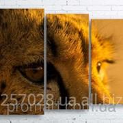 Модульна картина на полотні Гепард код КМ100130-091 фото