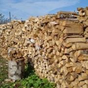 Колотые березовые дрова фото