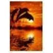 Светящийся постер в рамке «Дельфины», формат А4 фото