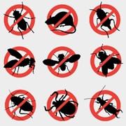 Дезинсекция уничтожение насекомых тараканов блох клопов Ялта, Алушта фото