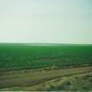 Оросительная гидромелиорация земель фото