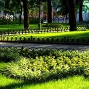 Полив общественных территорий (проектирование,монтаж и обслуживание) фото