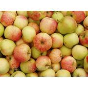 Яблоки не стандарт фото
