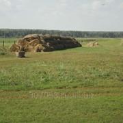 Ферма и большой земельный участок в собственности фото