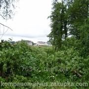 Вырубка древесно-кустарниковой растительности фото