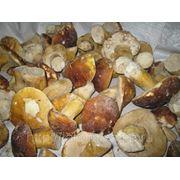 Белый гриб замороженный 6-12см фото