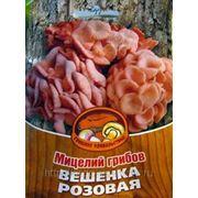 Мицелий Вешенки Розовой. Купить мицелий Вешенки. Мицелий грибов почтой фото