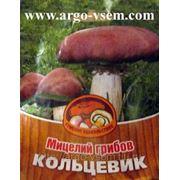 Мицелий Кольцевика. Купить мицелий Кольцевика. Мицелий грибов почтой фото