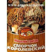 Мицелий Сморчков. Купить мицелий Сморчков. Мицелий грибов почтой фото