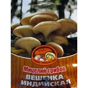 Мицелий Вешенки Индийской. Купить мицелий Вешенки. Мицелий грибов почтой фото