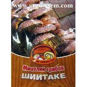 Мицелий Шиитаке. Купить мицелий Шиитаке. Мицелий грибов почтой фото