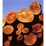 Переработка древесины. фото